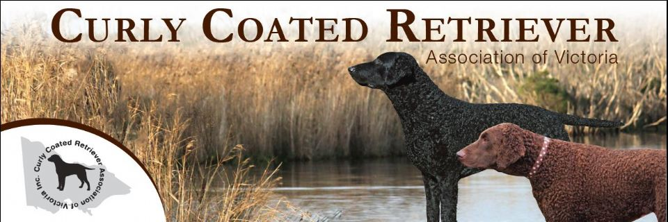 Curly Coated Retriever Club of Victoria